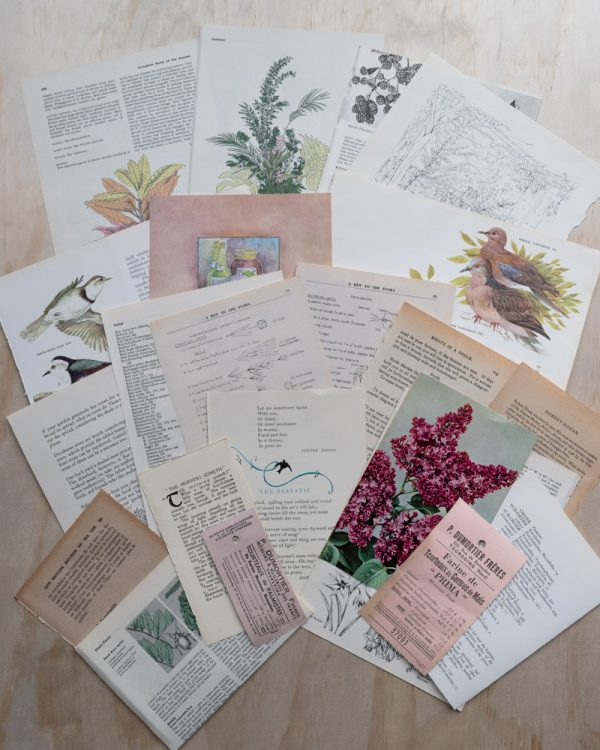 All papers that would be enclosed in an example Naturist paper pack fanned out decoratively